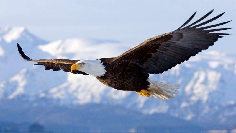 Was fressen Adlern?