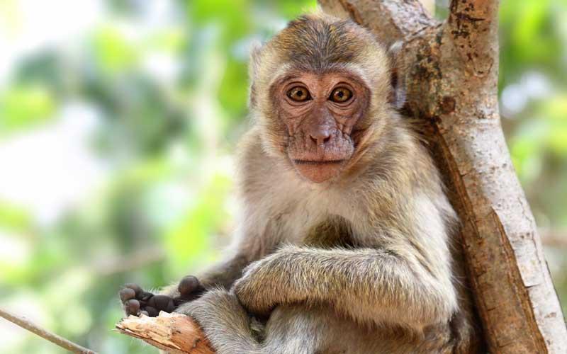 Was fressen Affen?