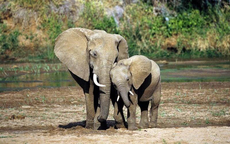 Was fressen Elefanten?