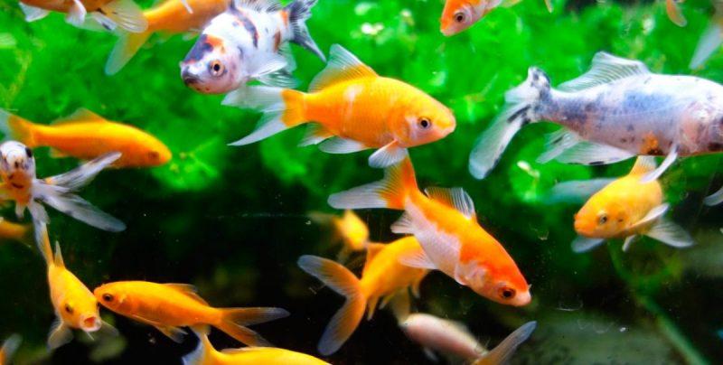 Was fressen Fische?