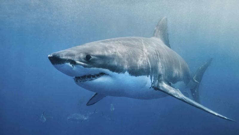 Was fressen Haie?