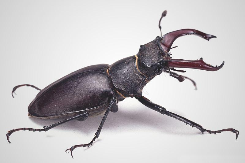 Was fressen Käfer