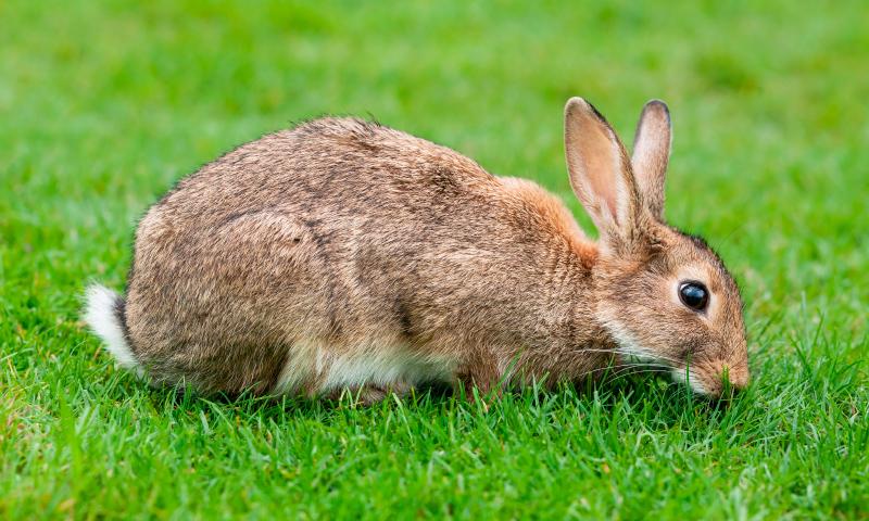 Was fressen Kaninchen?