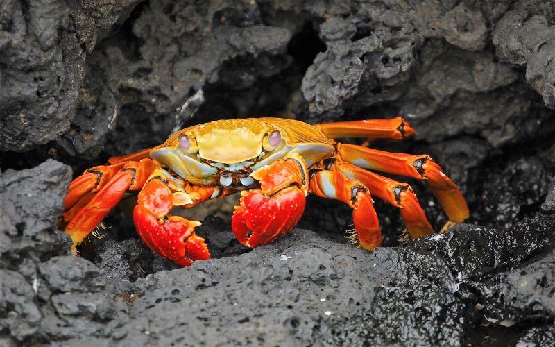 Was fressen Krabben?