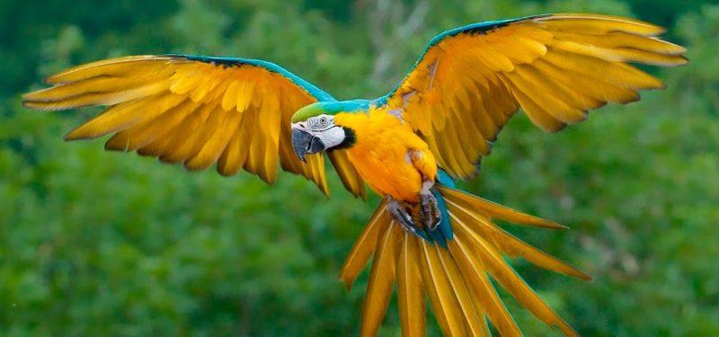 Was Fressen Papageien?