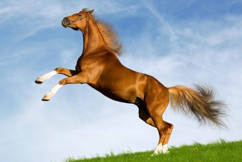 Was fressen Pferde?