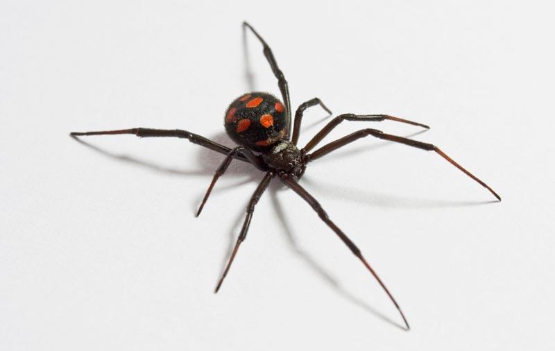Was fressen Spinnen