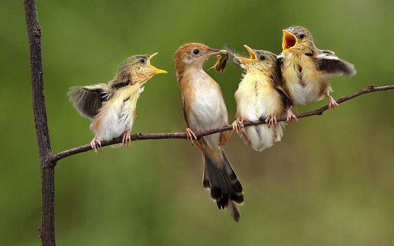 Was Fressen Vögel?